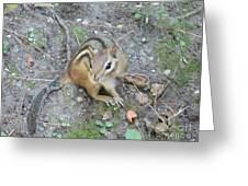 Chipmunk Feast Greeting Card