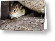 Chipmunk In Danger Greeting Card