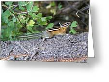 Chipmunk On A Log Greeting Card