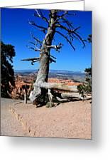 Chipmunk Tree Greeting Card
