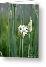 Chive Fields Greeting Card