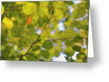 Chlorophyll Daydream Greeting Card