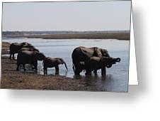 Chobe Elephants Greeting Card