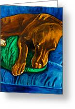 Chocolate Lab On Couch Greeting Card