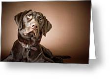 Chocolate Labrador Retriever Portrait Greeting Card