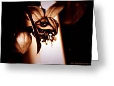 Chocolate Silk Fuchsia II Greeting Card