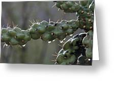 Cholla Cactus In The Rain Greeting Card