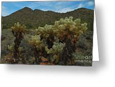 Cholla On The Mountainside Greeting Card