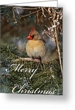 Christmas 3 Greeting Card