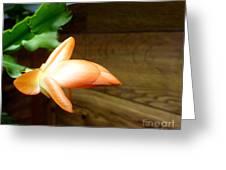 Christmas Cactus 'beach Dancer' Greeting Card