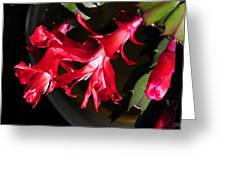 Christmas Cactus Trio Greeting Card