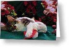 Christmas Joy W Kitty Cat - Kitten W Large Eyes Daydreaming About Xmas Gifts - Framed W Poinsettias Greeting Card