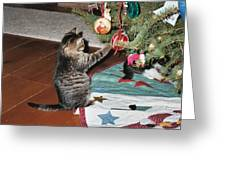 Christmas Kitten Playtime Greeting Card