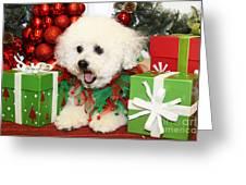 Christmas Portraits - Havanese Greeting Card