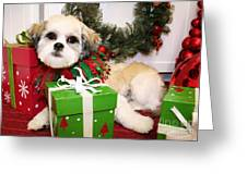 Christmas Portraits - Shihtese Greeting Card