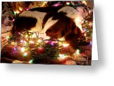 Christmas Spaniel Greeting Card