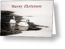 Christmas Swans 2367 Greeting Card