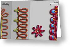 Chromatin Condensation, Diagram Greeting Card