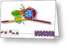 Chromatin Structure, Diagram Greeting Card
