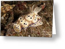 Chromodoris Kunei Nudibranch Carrying Greeting Card
