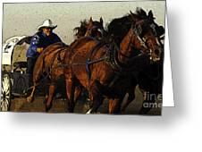 Rodeo Chuckwagon Racer Greeting Card