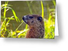 Chucky Woodchuck Greeting Card
