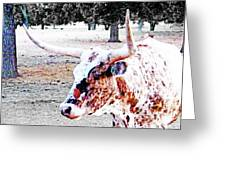 Cibolo Ranch Steer Greeting Card