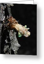 Cicada - First In Series Greeting Card