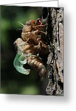 Cicada - Third In Series Greeting Card