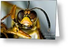 Cicada Killer Greeting Card