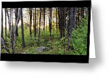 Cinematic Style Back Woods At Sunset Greeting Card