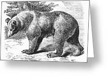 Cinnamon Bear Greeting Card