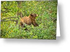Cinnamon Black Bear Limited Edition Greeting Card