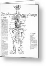 Circulatory System, 16th Century Greeting Card