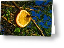 Citrus In The Tree Greeting Card