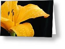 Citrus Rain II Greeting Card