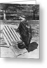 Civil War: Eagle Mascot Greeting Card
