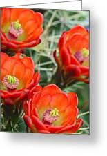 Claret-cup Cactus 2am-28736 Greeting Card