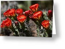 Claret Cup Cactus  Greeting Card