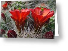 Claret Cup Duo Greeting Card