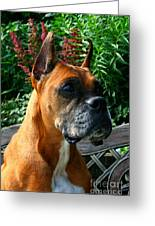 Classic Boxer Greeting Card