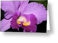Classic Purple Orchid Greeting Card