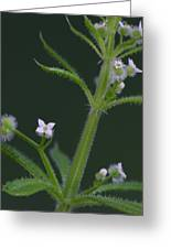 Cleavers Greeting Card