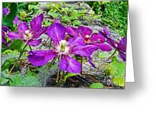 Clematis Abby Aldrich Rockefeller Garden Greeting Card