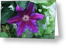 Clematis 'barbara Jackman' Flower Greeting Card