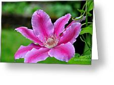 Clematis Bloom 2 Greeting Card