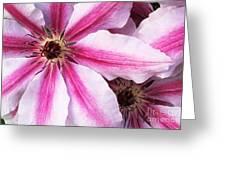 Clematis Close Up Greeting Card