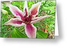 Clematis Greeting Card