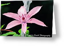 Clematis Lavender On Black Greeting Card