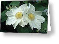 Clematis 'lemon Chiffon' Flowers Greeting Card